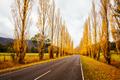 Gould Memorial Drive in Marysville in Australia - PhotoDune Item for Sale