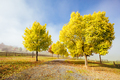 Yarra Valley Vineyard and Landscape in Australia - PhotoDune Item for Sale