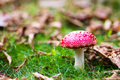 Pirianda Gardens Fungi in Victoria Australia - PhotoDune Item for Sale