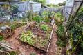 Urban Garden Plot in Australia - PhotoDune Item for Sale