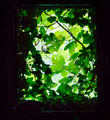 View from a window with green plants around - PhotoDune Item for Sale