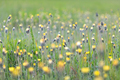 Colorful spring meadow - PhotoDune Item for Sale