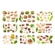 Big Set of Common Nuts Vector Isolated Objects - GraphicRiver Item for Sale