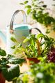 Home grown organic herbs, mustard, beet, baby pak choi - PhotoDune Item for Sale