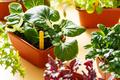 Home grown organic herbs - PhotoDune Item for Sale