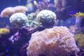 coral aquarium fish Aquarium corals reef - PhotoDune Item for Sale