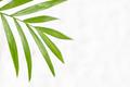 Palm Leaf on White Background. - PhotoDune Item for Sale