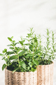 Close Up View on Mint and Rosemary Herbs. - PhotoDune Item for Sale