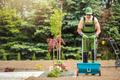 Backyard Garden Grass Seeding - PhotoDune Item for Sale