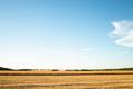 Cornfield Harvesting. - PhotoDune Item for Sale