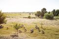 Sheeps on Grassland in Sunset. - PhotoDune Item for Sale