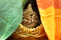 Cute cat watching from her hiding place - PhotoDune Item for Sale