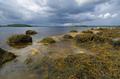 Coast of the White sea in Karelia, Russia - PhotoDune Item for Sale