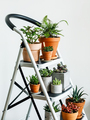 Different types of Home plant - PhotoDune Item for Sale