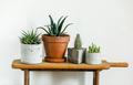 Home plant Succulent - PhotoDune Item for Sale