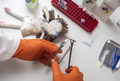 Forensic police extract hair from rag doll implicated in murder at crime lab for DNA analysis - PhotoDune Item for Sale