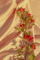 Hawthorn branch on silk background - PhotoDune Item for Sale