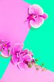 Decor flowers calla - PhotoDune Item for Sale