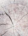 Log wood texture stylish minimal wallpaper. Bio eco minimal  background - PhotoDune Item for Sale