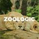 Zoologic Animal Presentation Template - GraphicRiver Item for Sale