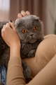 Young woman and cat on bed in the room - PhotoDune Item for Sale