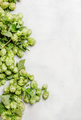Green hop cones, gray background, top view - PhotoDune Item for Sale