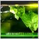 Colour Universe - VideoHive Item for Sale