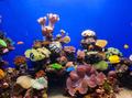 Coral aquarium - PhotoDune Item for Sale
