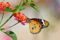 A yellow butterfly perched on the vibrant flower - PhotoDune Item for Sale