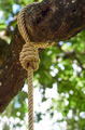 The rope knot on the big branch - PhotoDune Item for Sale