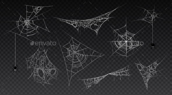 Halloween Web with Hanging Spider Insect Vector