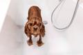 Funny wet dog in bathtub - PhotoDune Item for Sale