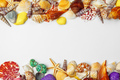 Composition of exotic seashells - PhotoDune Item for Sale