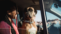 Multiracial people having fun driving car with pet dog in summer vacation - Friends in camper van - PhotoDune Item for Sale