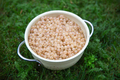 Bowl of white currants on the green grass - PhotoDune Item for Sale
