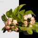 Spring Flowering of Apple or Cherry Trees - VideoHive Item for Sale