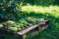 Freshly picked vegetables lie on wooden pallet - PhotoDune Item for Sale