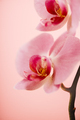 Orchid - PhotoDune Item for Sale