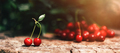 Ripe cherries on wooden table with sunlight - PhotoDune Item for Sale