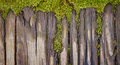 Wooden planks overgrown with moss - PhotoDune Item for Sale