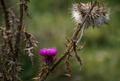 Autumn flower - PhotoDune Item for Sale