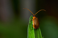 Bug on the green leaf - PhotoDune Item for Sale