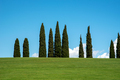 Stand of tall cypress trees on a hilltop skyline - PhotoDune Item for Sale