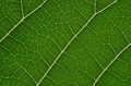 Close-up view of the leaf - PhotoDune Item for Sale