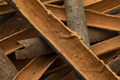 Dried Cinnamon bark close up full frame - PhotoDune Item for Sale