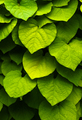 Green leaves background. Abstract shapes of nature - PhotoDune Item for Sale