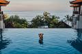 Woman on trip in bali enjoying swimming pool - PhotoDune Item for Sale