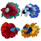 Set of Four Siamese Fighting Fish Bundle - GraphicRiver Item for Sale
