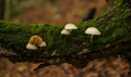 Mushroom in autumn forest - PhotoDune Item for Sale