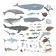 Vector Big Set of Sea Animals Illustrations - GraphicRiver Item for Sale